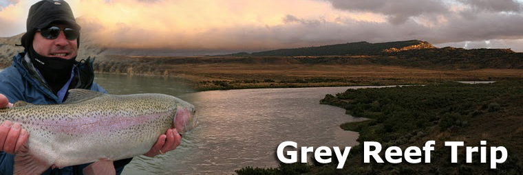 greyreef_header.jpg